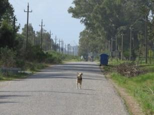 Muchos vecinos sintieron curiosidad por el evento, lo ponemos a este fiero can en representación de todos ellos.