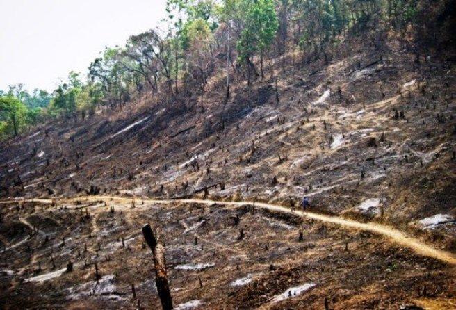 По данным WWF, для посадки деревьев, которые будут использоваться для производства пальмового масла, каждый час вырубаются тропические леса площадью 300 футбольных полей.
