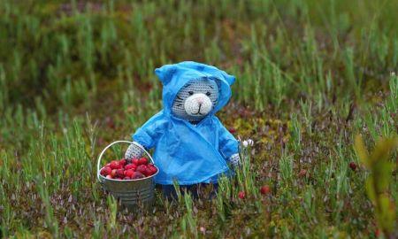 сборщик ягод