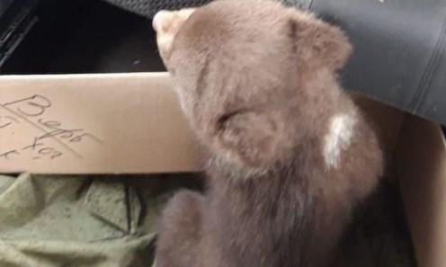 Медвежонок сидит в коробке в машине