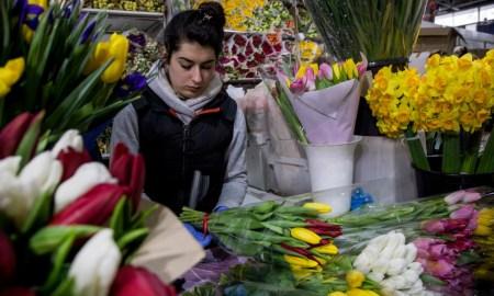 Девушка за прилавком цветочного магазина в окружении букетов с тюльпанами