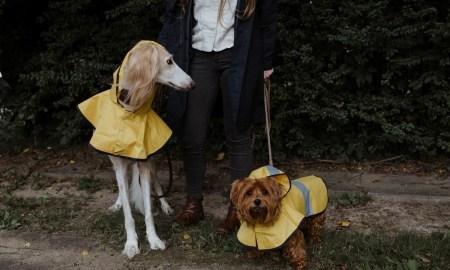 две собаки с хозяйкой