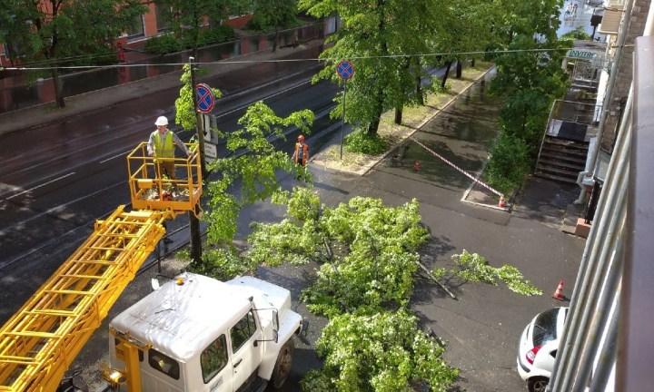 рубка деревьев на Куйбышева