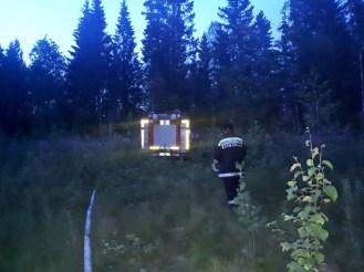 горит лес