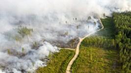 Пожары в карелии Самозеро