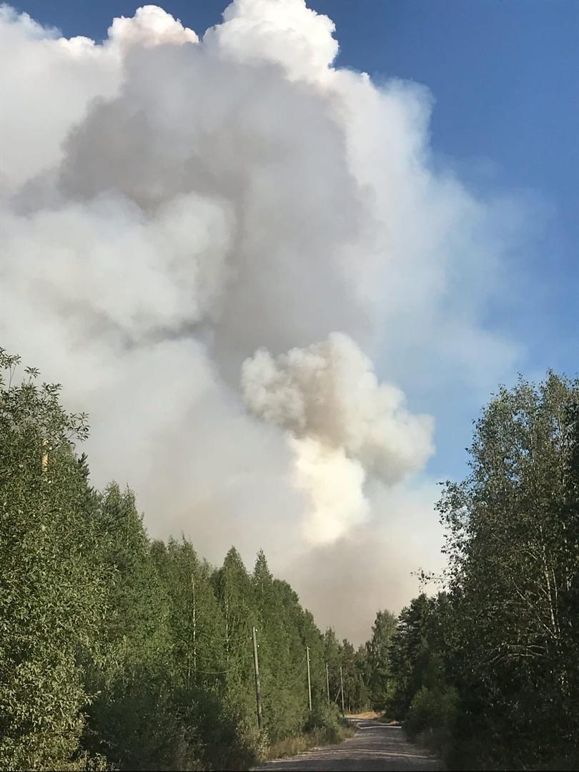 лесной пожар в поселке