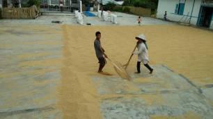 Manundo padi