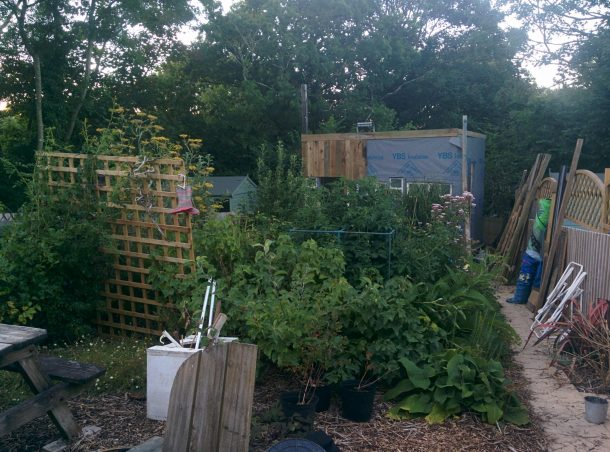 The new shed appears through the garden