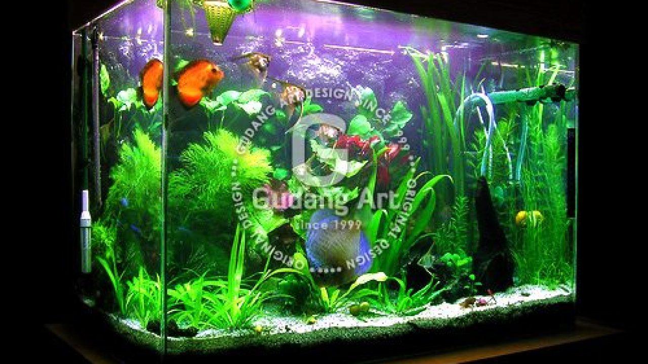 Tips Dan Cara Mudah Membuat Aquarium Kaca Gudang Art Design