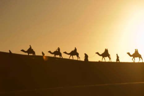 Desert - the typical desert photo with camels