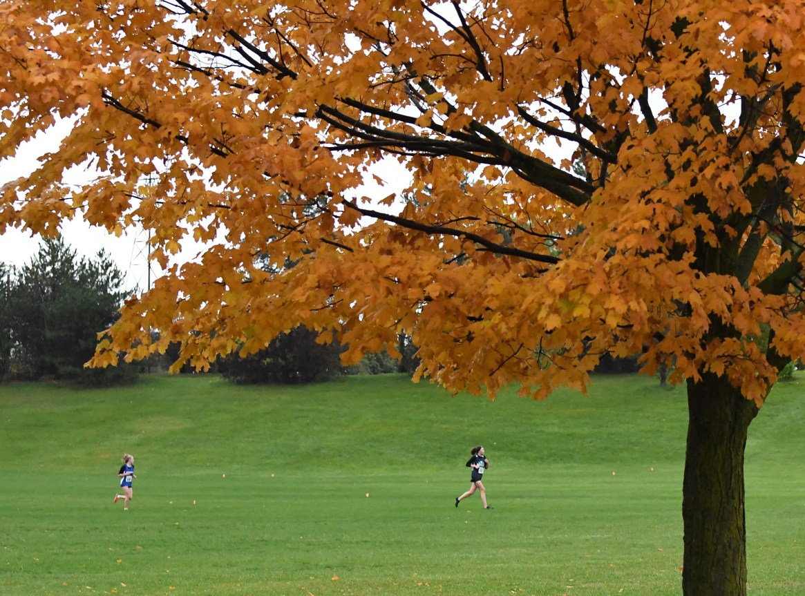 D4/10 cross-country championship results 2019
