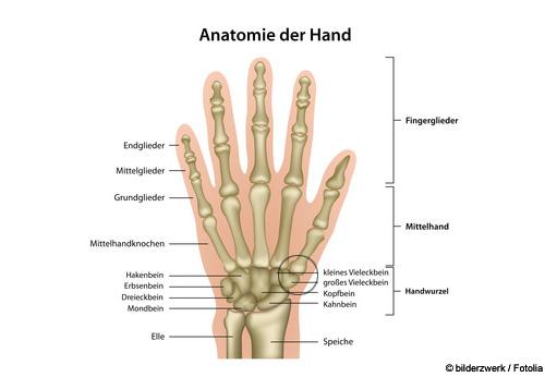 rhizarthrose arthrose des