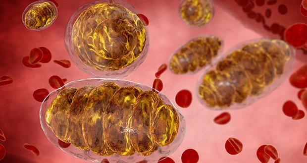 master-mitochondria-reduce-cancer-risks