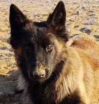 Prières pour chien malade Magnétiseur- Animaux-Guérisseur Jacques