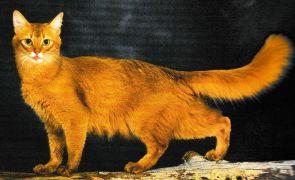 Le Somali. Jacques magnétiseur guérisseur animaux