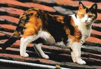 Jacques magnétiseur guérisseur animaux  vous présente le chat de Gouttière le père de toutes les races félines.