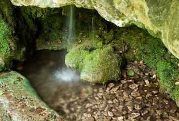 Illustration des fleurs de Bach : Rock water - Rock water : pour s'accorder la joie de vivre, garder un esprit souple