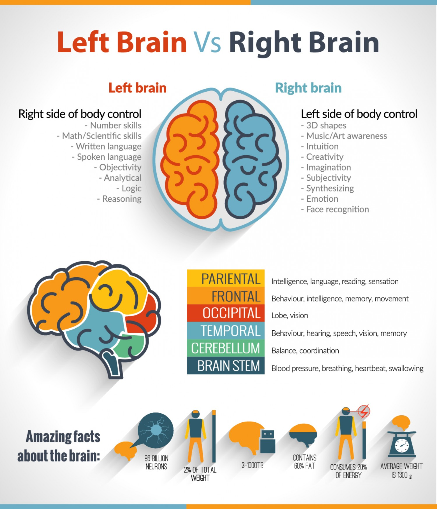 What Makes Us Right Handed Or Left Handed