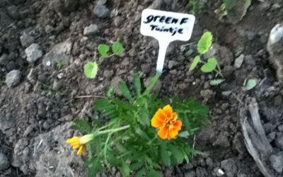 Almere heeft 6 nieuwe tuintjes