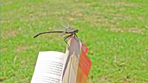 dragonfly-book-summer_h