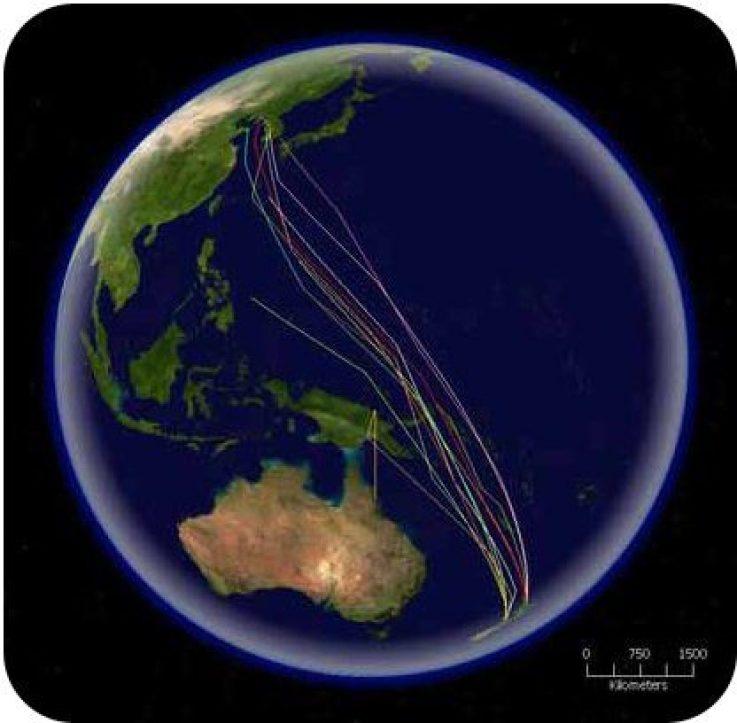 Godwit Migration Route