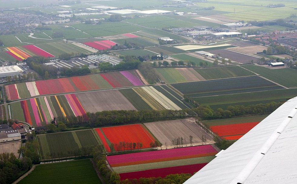 Tulip fields in Holland as seen from an airplane.