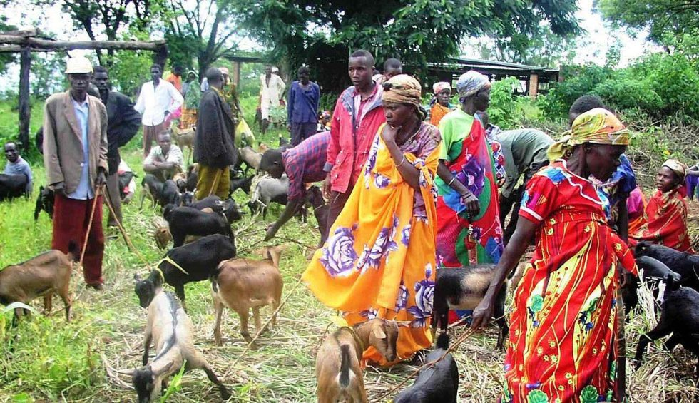 A group of people in Burundi with goats