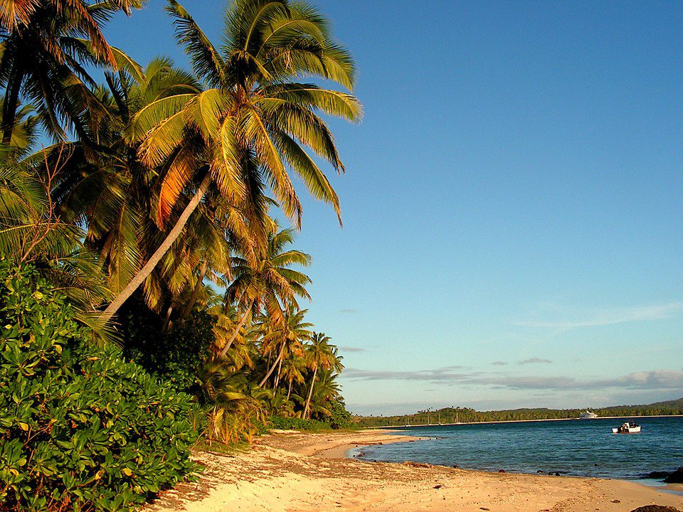 Coconut palms line the beaches of Fiji.