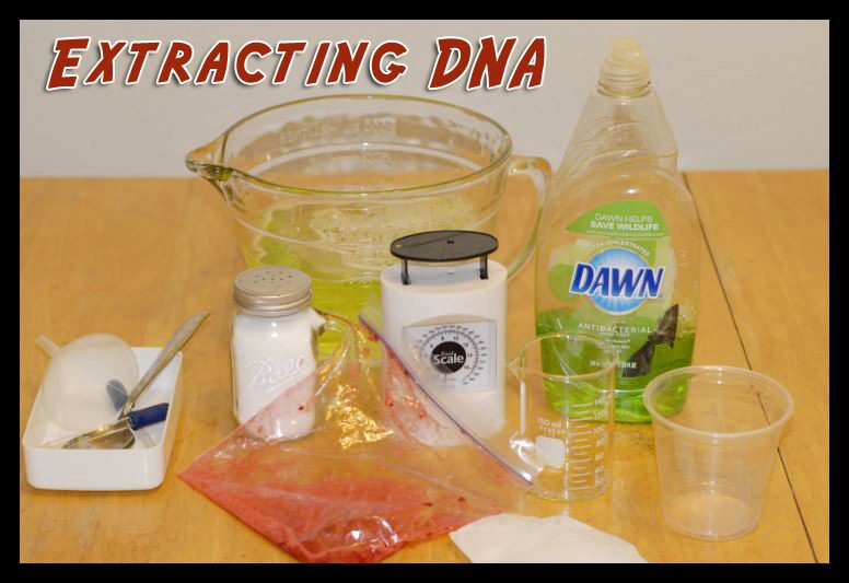 Extracting DNA science experiment