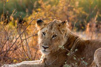 León Kruger Sudáfrica