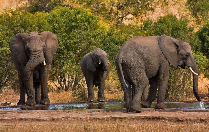 Parque nacional Kruger Sudáfrica