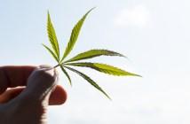 anvisa-simplifica-regras-para-importação-de-medicamentos-a-base-de-cannabis