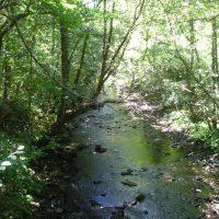 Ruta del Agüeira... entre el río y una espesa cubierta vegetal de castaños, robles, madroños…