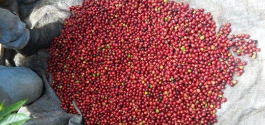 Café vencedor vem da Fazenda Santa Bárbara.