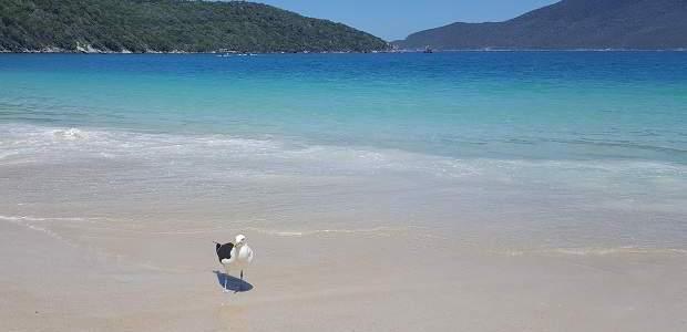 Prainhas de Arraial do Cabo: Beleza Única!