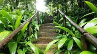 Parque do Jacarandá