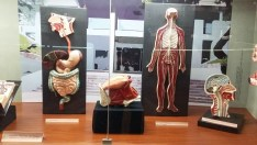 Museo Provincial de Ciencias Naturales