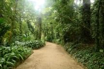 Jardim Botânico/ foto Rodrigo Soldon