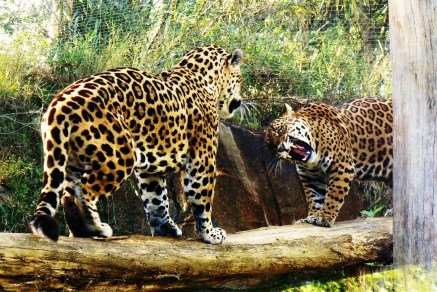 Gramado Zoo