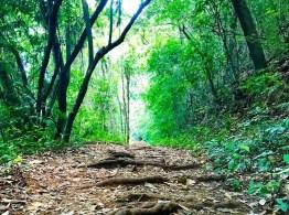 Parque Ecológico da Pavuna