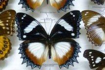Butterflies Exposicion de Mariposas
