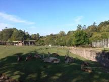 Zoo Parque Lecocq