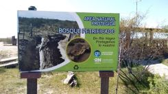 Monumento Natural Bosque Petrificado