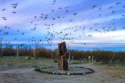 Monumento Natural Bosque Petrificado