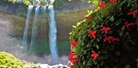Cascada Dora