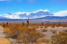 Parque Nacional Los Cardones/ foto Norberto Pancetti