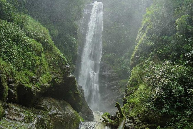 Cascada Caturra