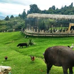 Bioparque Guátika