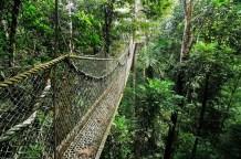 Iwokrama Forest Reserve