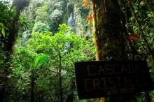 Parque Nacional Natural Cueva de los Guácharos/ foto Jeison Rosero